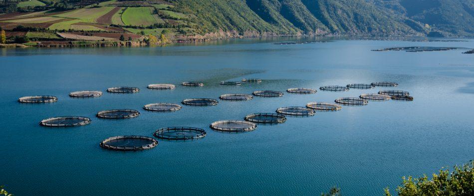mariculture cages aquaculture
